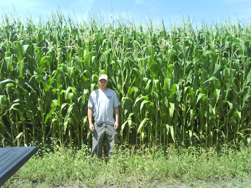 allan in corn and bruces.jpg