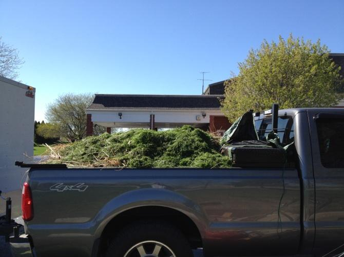 Ford filled with grass.JPG