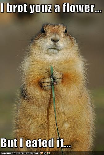 funny-pictures-groundhog-ate-flower.jpg