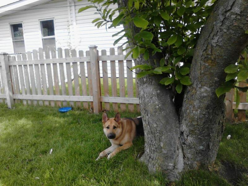 Max Chilling Under the Tree.jpg