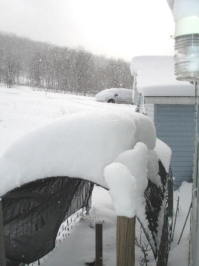 snow 1.2.08  WV bruceton mills 1+ft.jpg