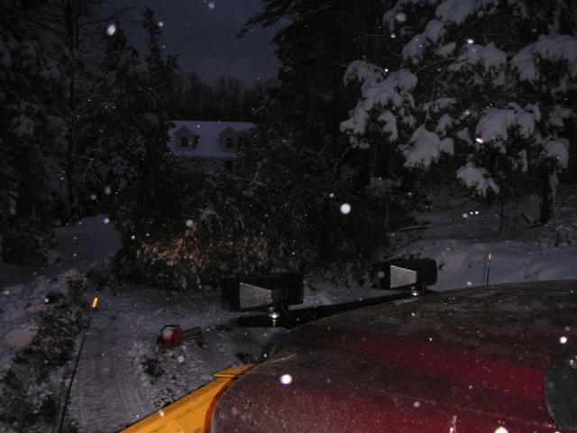 tree fell 2 1-3-6 (Small).JPG